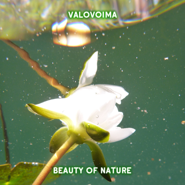 [KOVAWEB07] Valovoima - Beauty of Nature